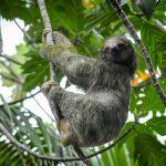 Costa Rica's Natural Jewels