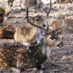 Shooting Wildlife - Photographic Safari